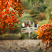 Fall Leaves of Kyoto 1 by Christian Del Rosario
