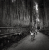 A ride through the bamboo forest of Kyoto by Christian Del Rosario
