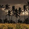 Coconut Row of La Reunion by Christian Del Rosario